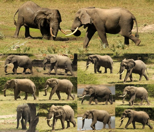 20130405 - Collage Elephants TEP - B
