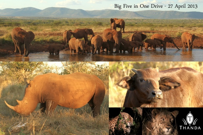 20130427 - Collage Big Five in One Drive 2009 - SIG