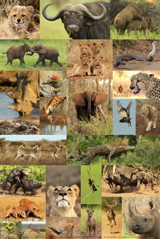 Thanda Wildlife 2013 - Copyright Christian Sperka