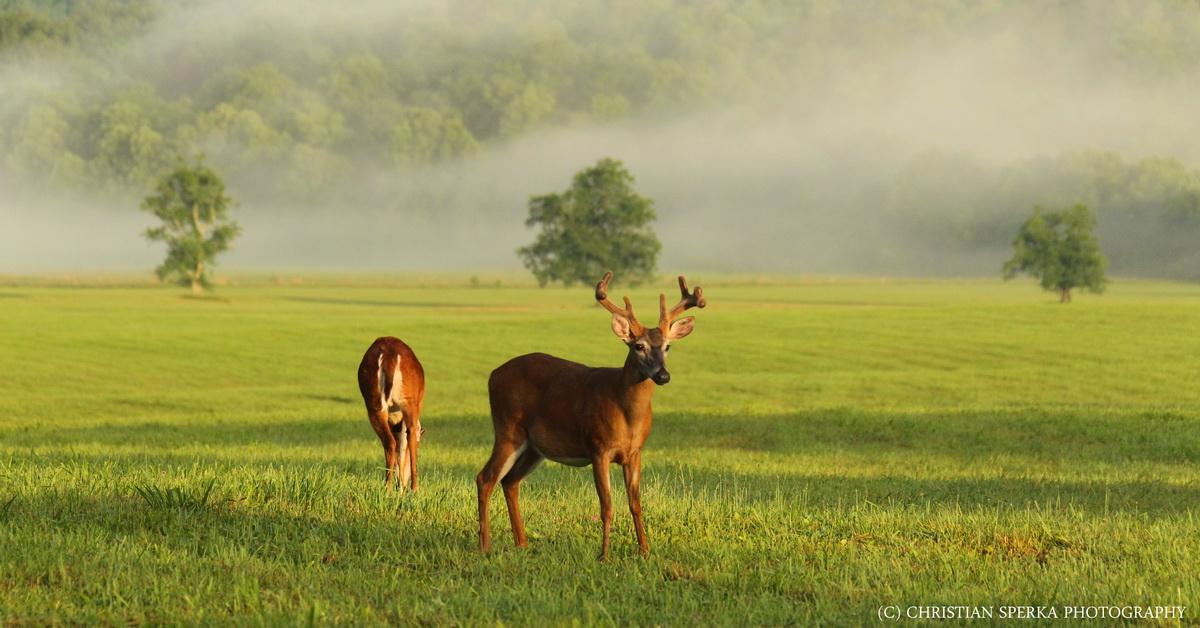Variety carnivores omnivores herbivores and scenery for Deer scenery