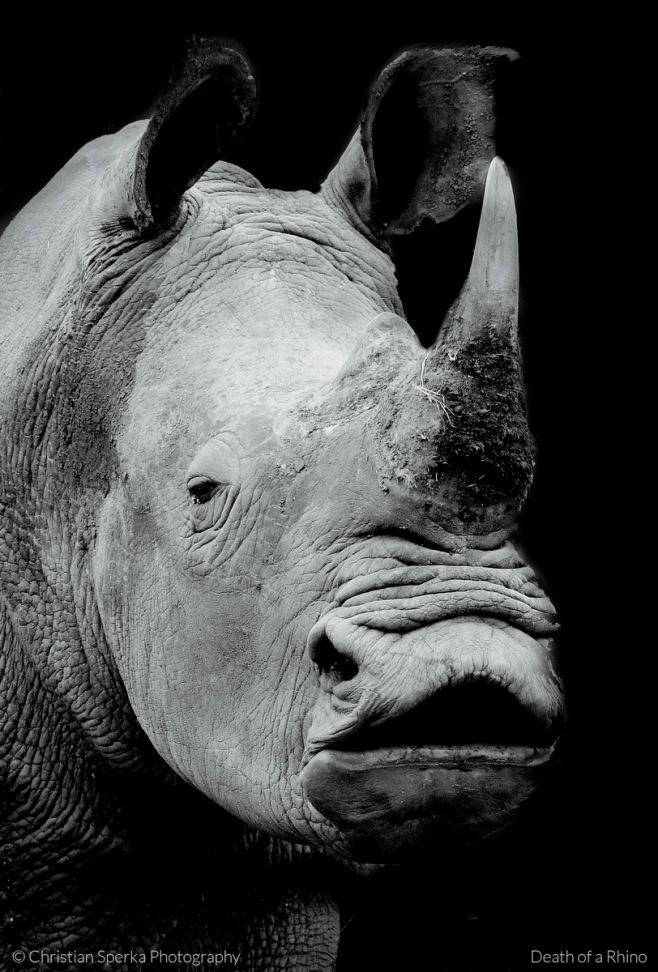 Death of a Rhino CSP 2