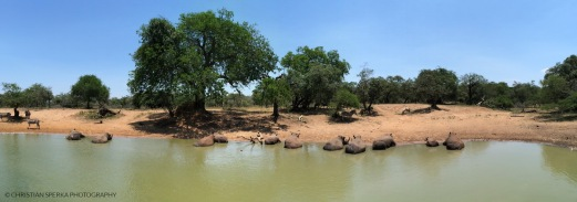 "Eleven | White Rhinos having a ""cool"" day a the waterhole"