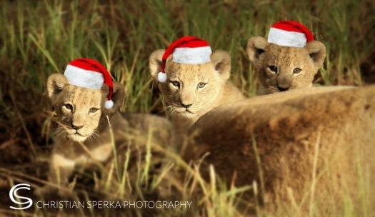 Christmas 2014 CSP