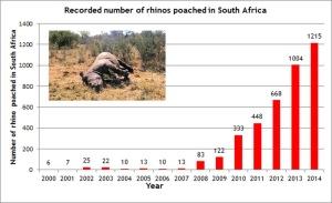 Rhino Poaching Stats