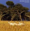 White Blesbock