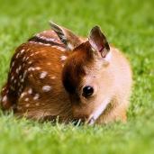 Very cute ...