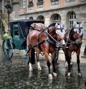 Wedding Carriage in Zofingen