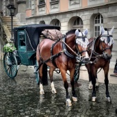 Wedding Carriage in Zofingen