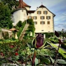 Rose Garden @ Schloss Heidegg