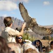 Falcon Ridge show ...