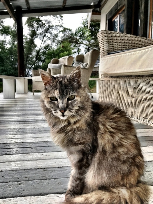 Not-so-wild-life ... this old cat kept me company as I relaxed at Cleopatra Mountain Farmhouse ...
