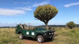 The Green Mamba 1